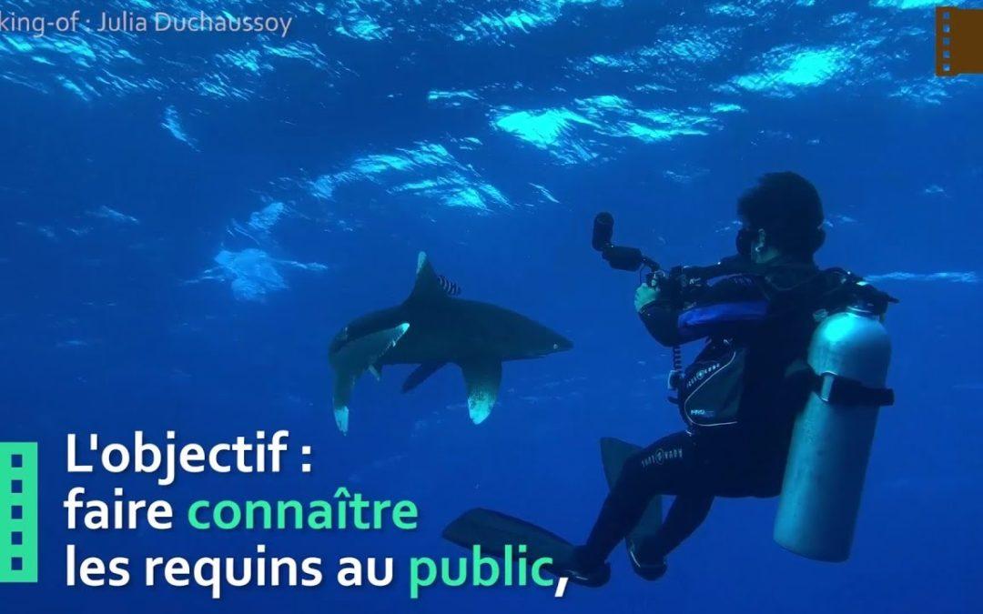 Patrick Metzlé – Une série documentaire sur les requins